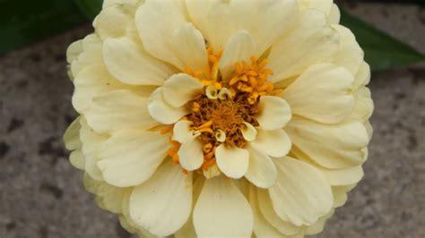 imagenes de flores mas bonitas im 225 genes de las flores mas bonitas hermosas y bellas youtube