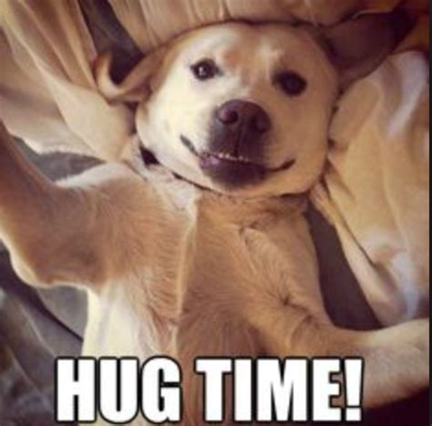 Meme Hug - hug your dog regardless of what they tell you the knob