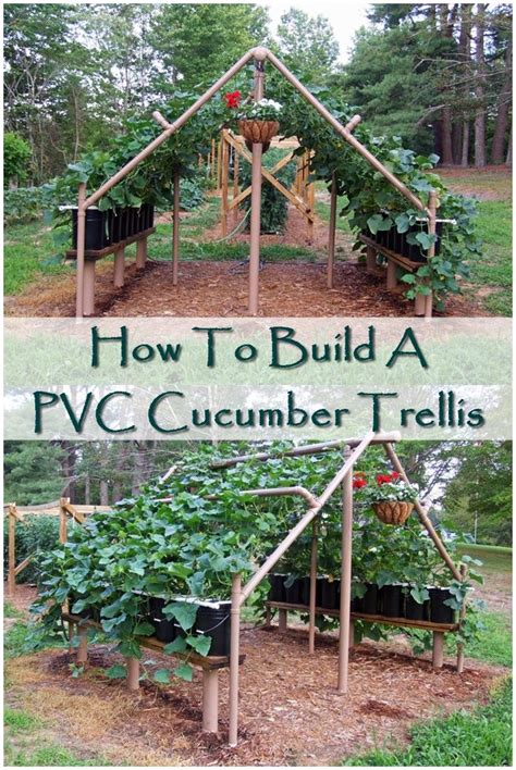 how to build a trellis how to build a pvc cucumber trellis cucumber trellis