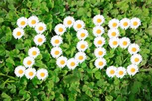 New Beautiful Flowers - beautiful flowers happy new year 2015 wallpape 8900