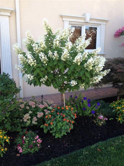 hydrangea front yard best 25 hydrangea landscaping ideas on
