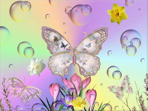 and butterfly butterflies images butterflies in hd wallpaper and background photos 17274857