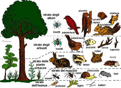 catena alimentare nel bosco cammina bosco