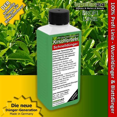 Kirschlorbeer Als Hecke 250 by Kirschlorbeer D 252 Nger Lorbeer Prunus Laurocerasus 250ml