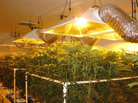 grow house marijuana grow house found inside commercial building in