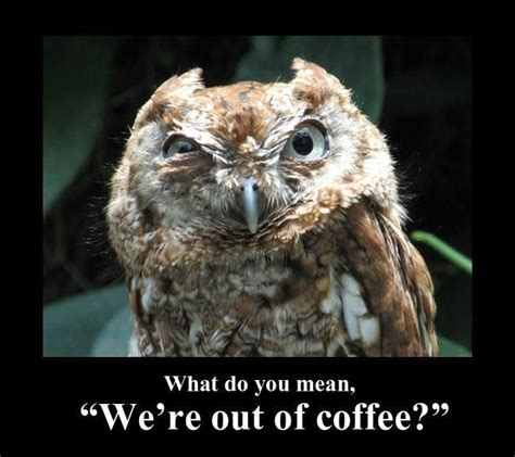 Funny Owl Memes - best 25 funny owls ideas on pinterest funny owl