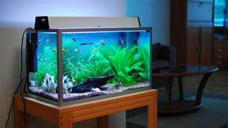 Aquarium For Home The Best Home Aquariums Of 2017 Come Into The Water
