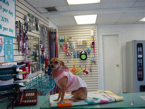 animal inn pet boarding kennel las vegas nv