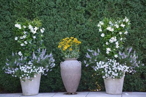 b for diamond trio ochre pot outdoor decor and lighting 12 best mandevilla planters images on pinterest flower
