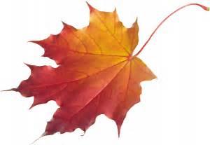 Клен листья рисунок