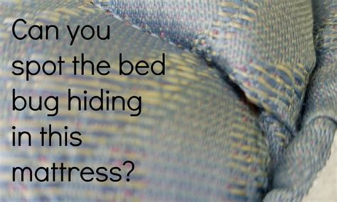 bedbug treatment and control in san diego county
