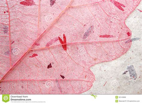 How To Make Handmade Paper With Flower Petals - pink skeleton leaf background royalty free stock photos