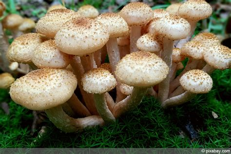 Pilze Im Garten Lamellen by Beliebte Waldpilze Essbare Pilze Erkennen Fotos