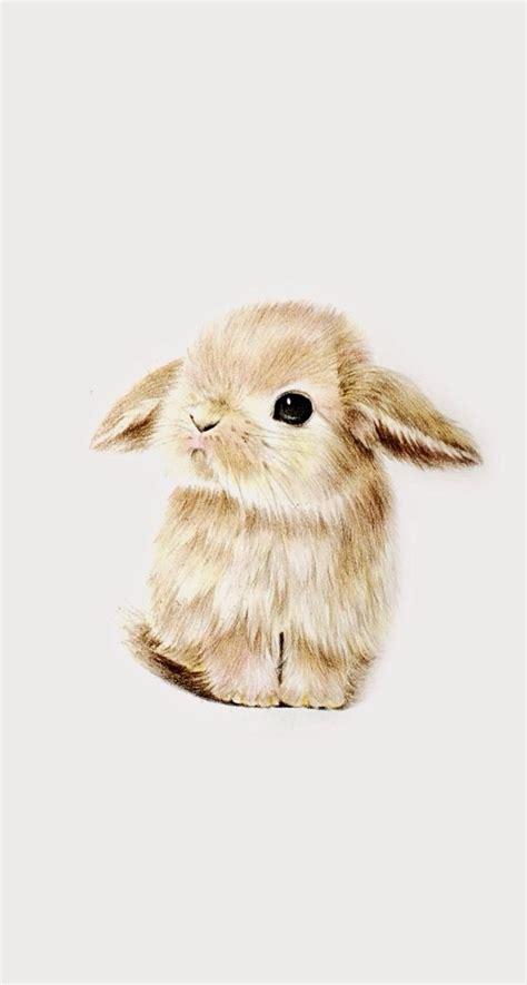 cute rabbit themes best 20 cute wallpapers ideas on pinterest