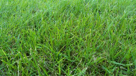 olor a hierba reci 233 n cortada science monkey