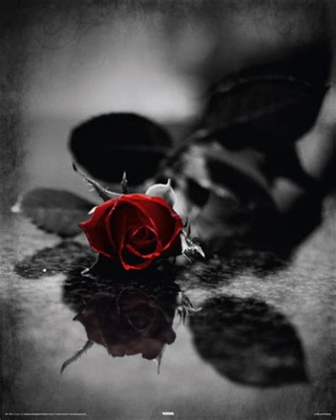 Goth Home Decor by Gothic Red Gothic Rose I Mini Posters Buy Posters