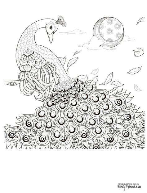 coloring pages for adults peacock 11 free printable coloring pages coloring