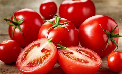 konsumsi tomat  apel mampu perbaiki paru paru perokok