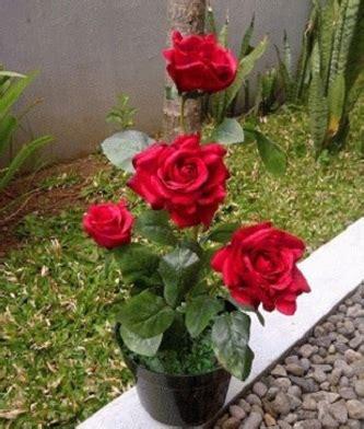 Pupuk Untuk Bunga Ros cara menanam bunga mawar dengan batang di dalam pot