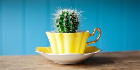 desk cactus the best office plants plants that will thrive on your desk