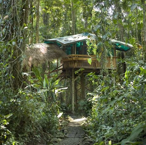 costa rica tree house amazing tree house hotels impact lab