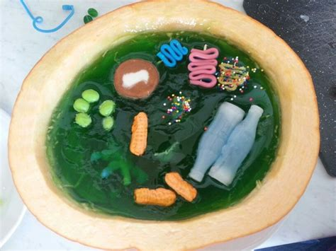 edible plant cell model includes cell wall