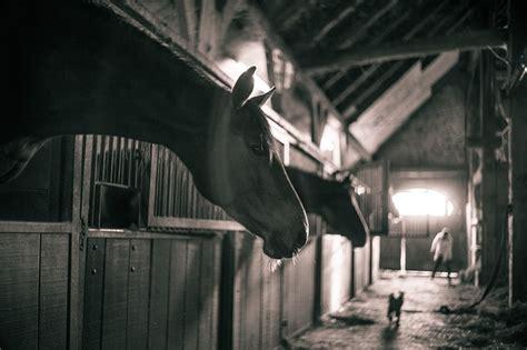 Helm Doff Racing Technology Black Blue Free Jaring Helm free photo horses barn black white free image
