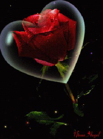 imagenes de rosas rojas y corazones imagenes animadas de corazones y rosas rojas