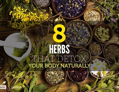 Herbs To Detox Your by 8 Herbs That Detox Your Naturally