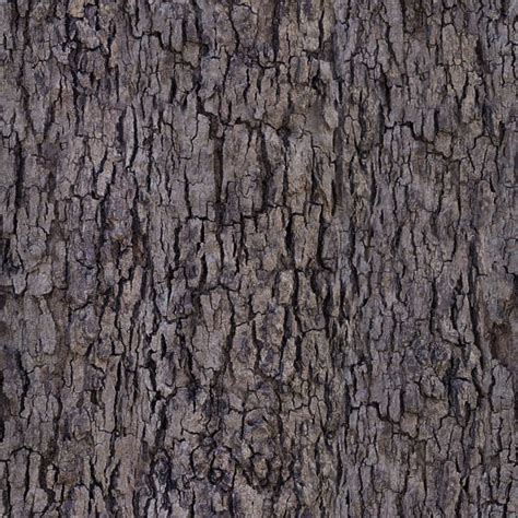 how to a small not to bark barkdecidious0194 free background texture tree bark decidious brown beige seamless