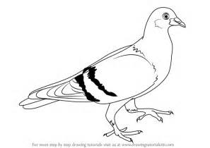 draw a pigeon learn how to draw a pigeon birds step by step drawing