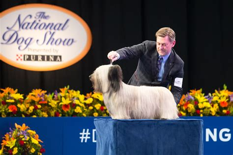 national show breed results meet the breed terrier national show winner terrier