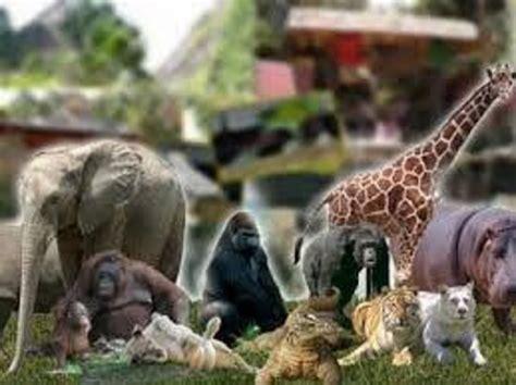 imagenes animales del zoologico zoologico de guadalajara jalisco picture of zoologico
