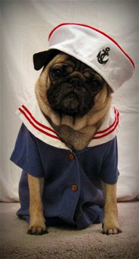 pug sailor 1000 images about pugs in on pug pugs in costume and fireman costume
