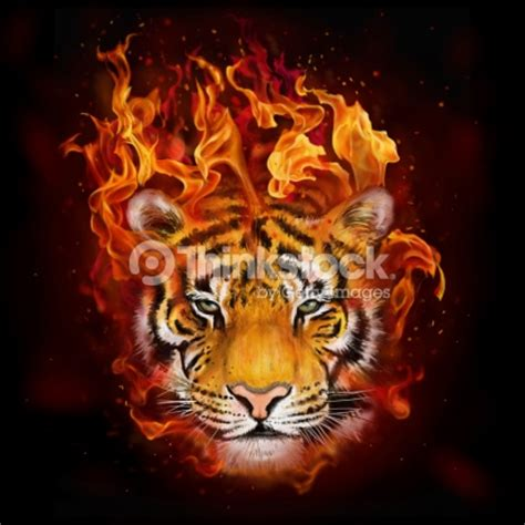 Poesa En U K by Of A Tiger In Flames Stock Illustration Thinkstock