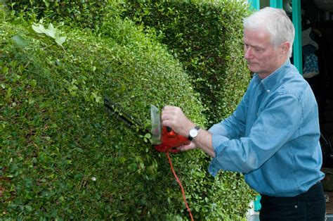 topiary trimmers tim s topiary or bushe s bushes out of my shed