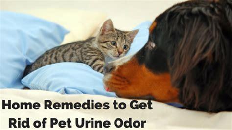 cat urine odor removal home remedy pet urine odor