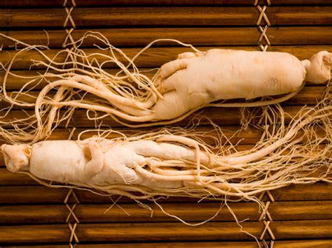 Ginseng Putih lengkap berbagai macam ginseng manfaat ginseng dan