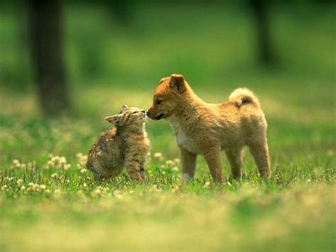 puppies vs kittens dogs vs cats images dogs and cats hd wallpaper and background photos 13631825