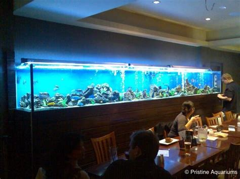 Design Aquarium Restaurant | best 25 restaurant aquarium ideas on pinterest