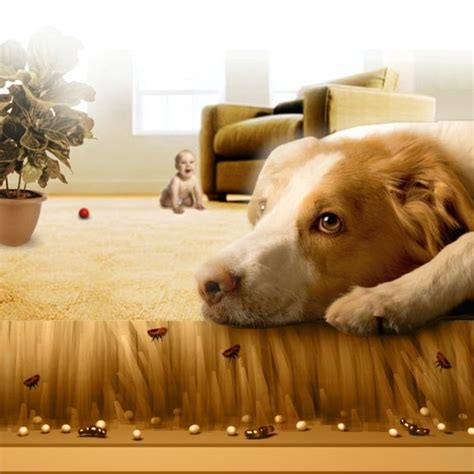 dog fleas in house how to get rid of fleas on dogs hirerush blog