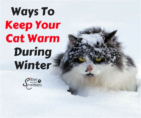 how to keep your cat from scratching your couch how to keep your cat awake during the day tipstate
