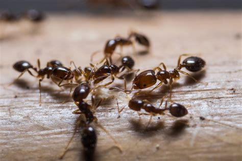 Getting Rid Of Ants In The Kitchen by How To Get Rid Of Ants In The Kitchen Non Toxic