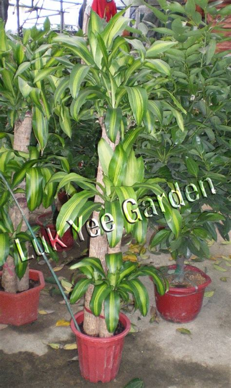 plant l home plant m l