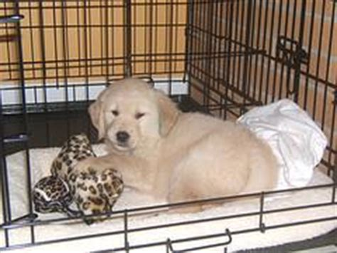 puppy cries all in crate crate puppies