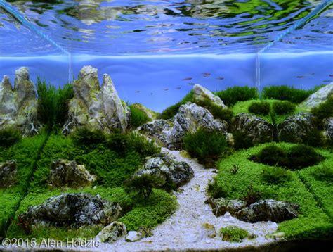 aga aquascape top ten nano aquascape aga 2015 aquajaya