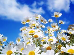 Beautiful Spring by Beautiful Collection Of Spring Wallpapers