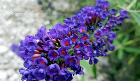 my top picks fragrant flowers and shrubs for your garden