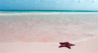 beaches with pink sand image gallery pink sand