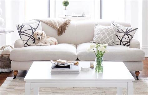 Pet Friendly Sofa How To Choose Pet Friendly Furniture Pet Friendly Leather Sofa